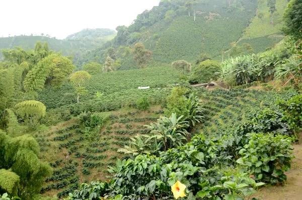 Finca cafetera San Alberto en Colombia