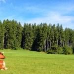 Foto de Alemania con niños, vaca en la Selva Negra