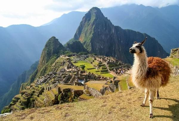 Foto de Machu Picchu en Peru, alpaca