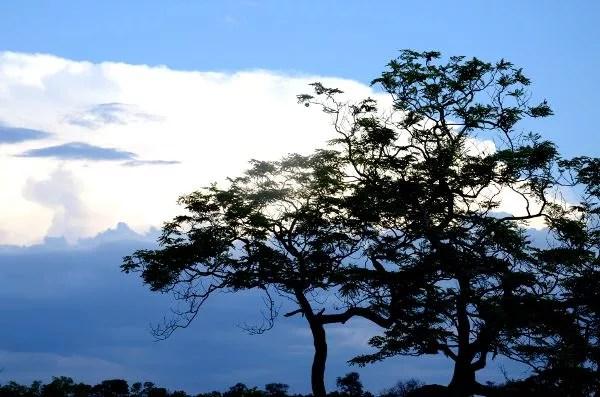 Fotos Cheetah Plains en el Kruger de Sudafrica, arbol