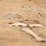 Fotos Dinópolis Teruel, huellas de dinosaurio