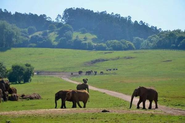 Fotos Parque de Cabárceno en Cantabria, elefantes
