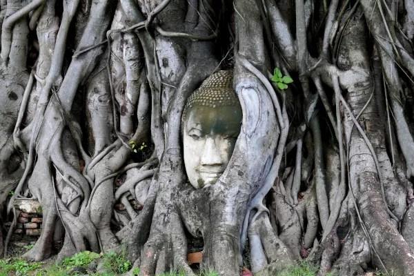 Fotos de Ayutthaya en Tailandia, buda en el arbol
