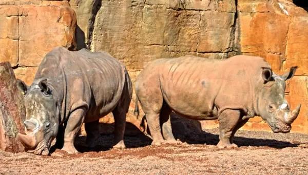 Fotos de BIOPARC Valencia, rinocerontes