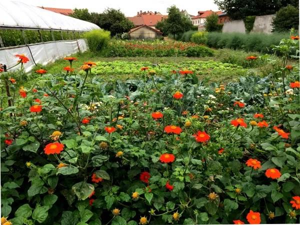 Fotos de Bamberg, jardin de horticultores
