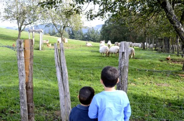 Fotos de Goierri, Teo y Oriol mirando ovejas