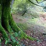 Fotos de Goierri, bosques de Zerain