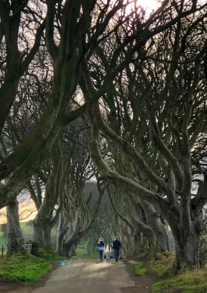 Fotos de Irlanda del Norte, The Dark Hedges vertical