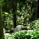 Fotos de Madeira, Monte Palace Tropical Garden Funchal