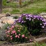 Fotos de Romangordo en Caceres, jardin de la Casa de los Aromas