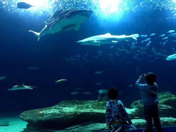 Fotos de Valencia, Teo y Oriol con los tiburones del Oceanografic