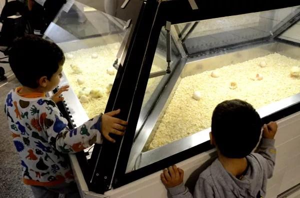 Fotos-de-Valencia-Teo-y-Oriol-en-el-Museo-de-las-Ciencias-Príncipe-Felipe ▷ 10 lugares imprescindibles con niños en Valencia