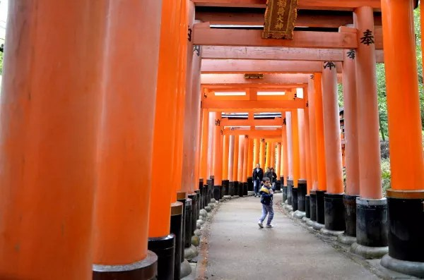Fotos del Fushimi Inari de Kioto, Teo entre los torii