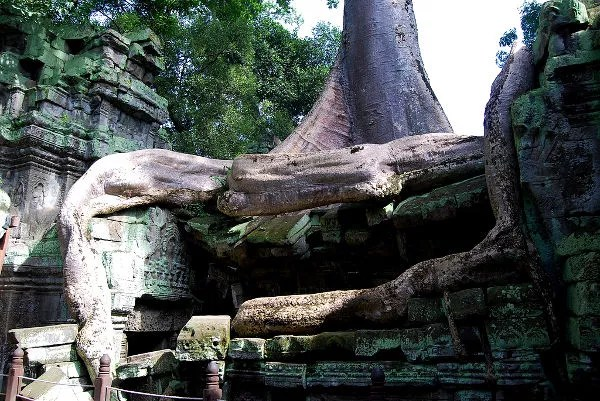 Los árboles se comen la selva en Ta Prohm