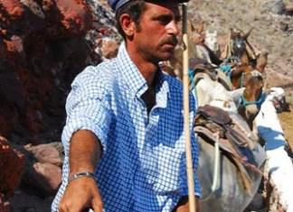 Los burros de Santorini en Grecia