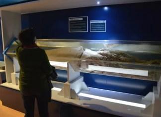 Museo del Calamar Gigante de Luarca