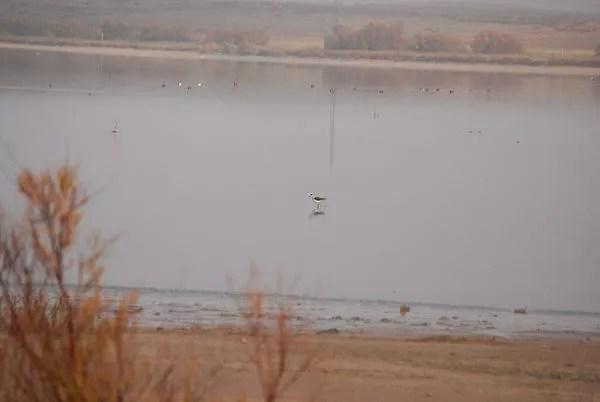 Observación de aves e interpretación de los humedales