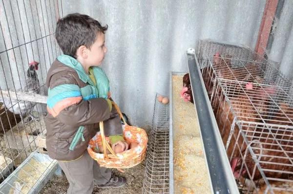 Teo recogiendo huevos en la Granja La Cuesta de Santa Marina