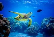 Turismo sostenible, buenas practicas tortuga marina