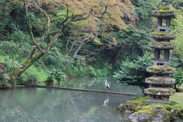 Una grulla en el Kenroku-en de Kanazawa