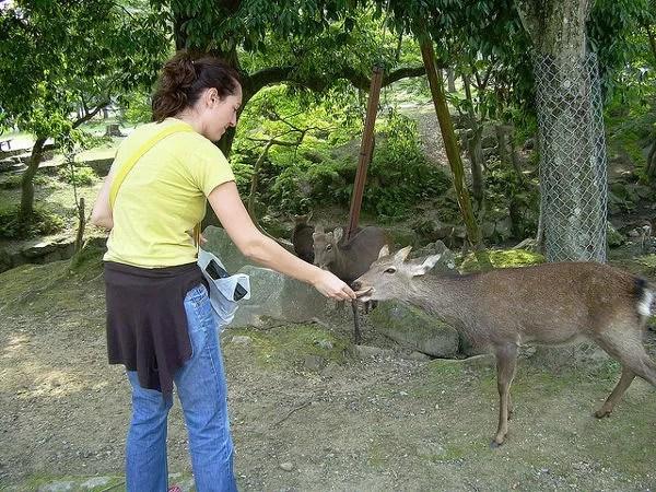 Alimentando a los ciervos en Nara