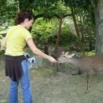 Vero alimentando a los ciervos en el Nara-koen