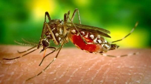Dengue en República Dominicana