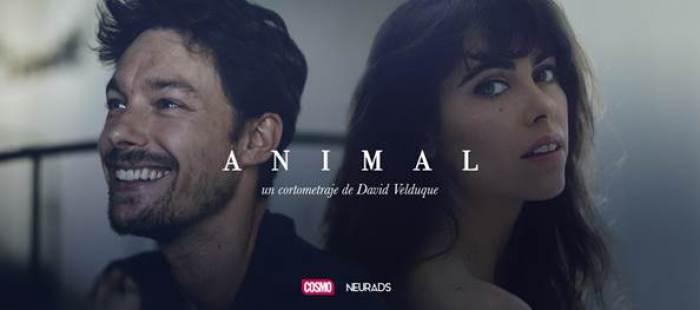 Animal cortometraje COSMO