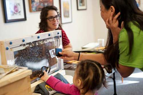 Abejas se albergan en un marco mientras la apicultora Roberta Kato comparte el descubrimiento con un niño fascinado.