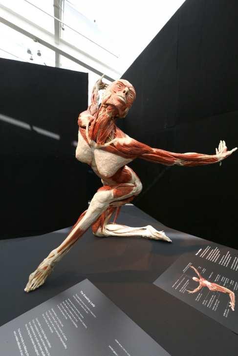 cuerpo-5