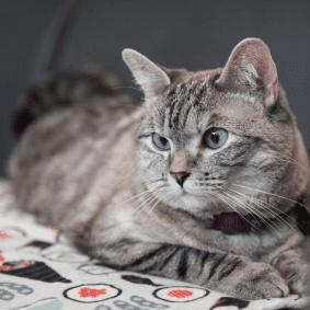 cat-con-cat