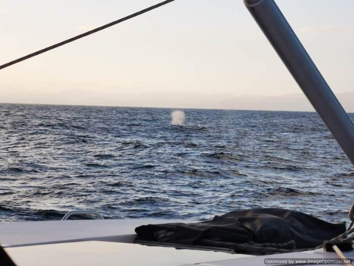 Chorro de ballena