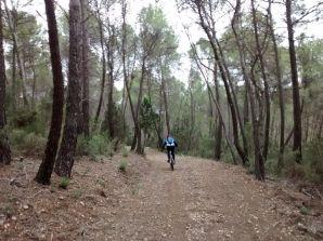 Entre pinos
