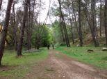 En medio de los pinos