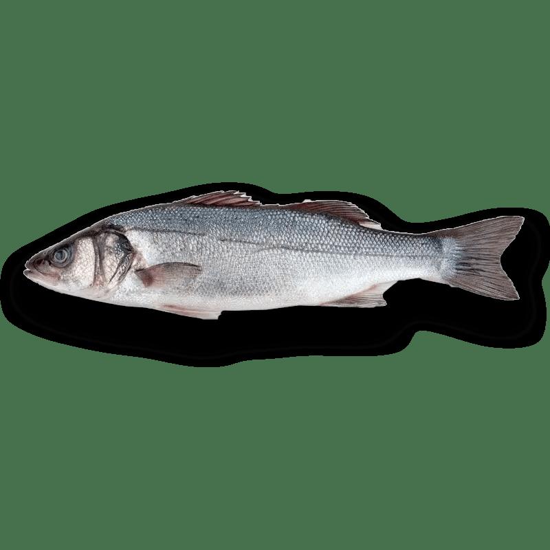 el pescador barcelona Lubina 1