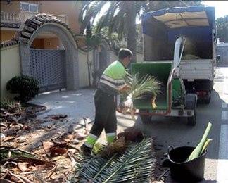 Triturando palmeras afectadas de picudo rojo