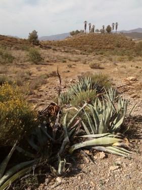 Pitas afectadas en CASTALA (Almería)