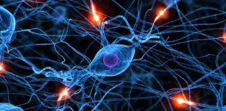 serotonina-sinapsis