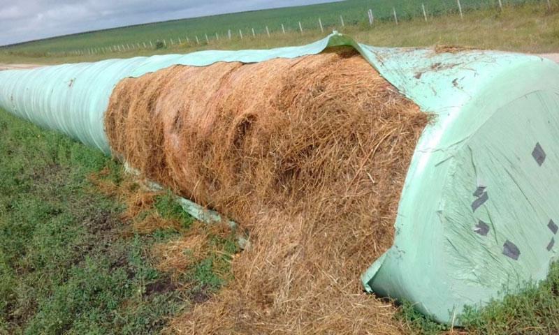 Los ganaderos esperan que el silo prometido por el Ministerio llegue pronto por la situación  que atraviesan, debido al intenso verano.