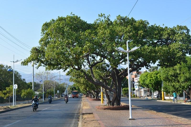 Valledupar cuenta con un aproximado de 80 mil árboles sembrados.  FOTO/ARCHIVO.