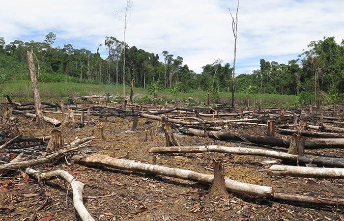 Un alto porcentaje de las áreas deforestadas son reservas naturales. Foto: cortesía.