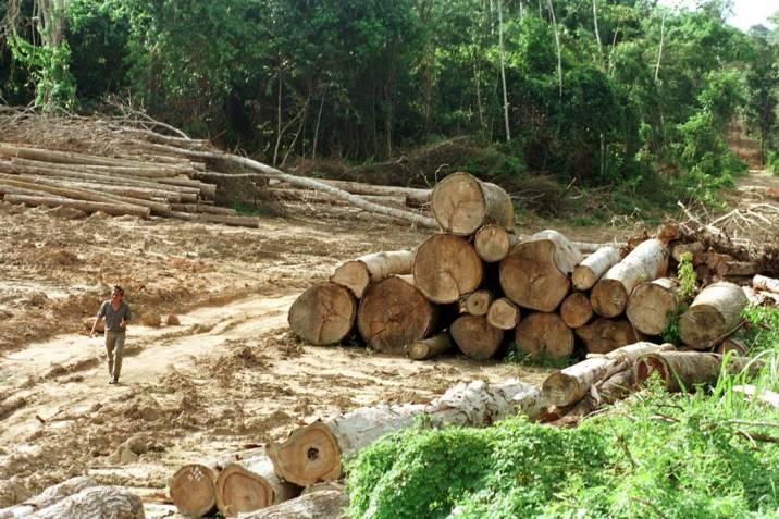 En el cuarto trimestre del 2020, se registraron 7 detecciones tempranas de deforestación en los municipios de Valledupar, El Copey y Agustín Codazzi.