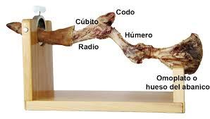 anatomia-del-hueso-de-la-paleta-El-Portal-del-Chacinado