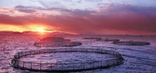 Industria salmonera destruye el fondo marino del sur de Chile