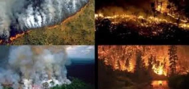 Mientras Bolsonaro vocifera: Arden los grandes bosques del planeta