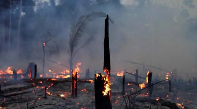 Ganadería industrial y soya transgénica queman la Amazonia