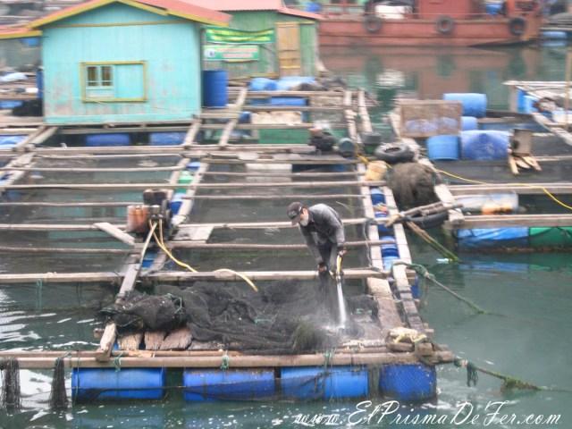Una constante, ver a los pescadores trabajando