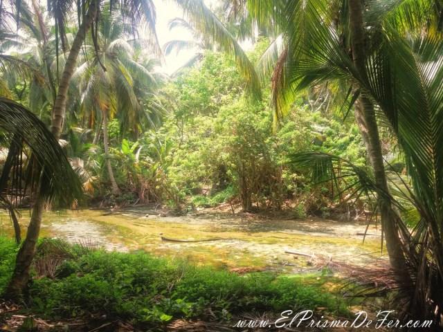 Selva tropical en el Parque Tayrona