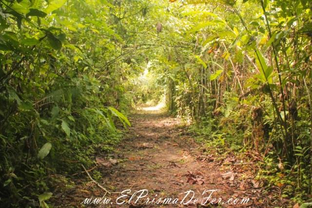 Camino a la comunidad Siona en la Reserva de Cuyabeno