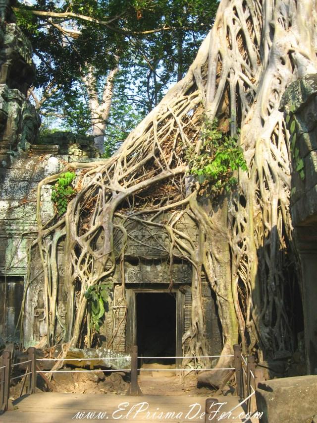 Ta Prohm, uno de los mejores templos donde se ven las ruinas invadidas por la naturaleza